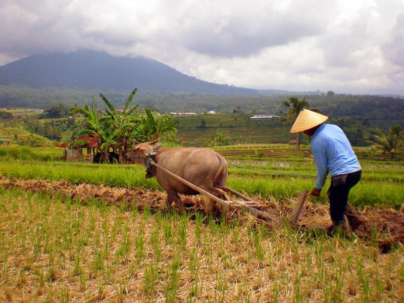 Nasib Petani Kurang Diperhatikan